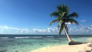 Download ♥♥ Relaxing 3 Hour Video of Tropical Beach with Blue Sky White Sand and Palm Tree Video