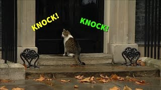 Download Knock, knock! It's Larry the Cat Video
