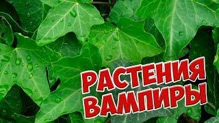 Download Опасные домашние цветы 🌺 РАСТЕНИЯ ВАМПИРЫ 🌺 Не сажайте их дома! Video