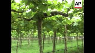 Download Thailand bids to up wine production Video