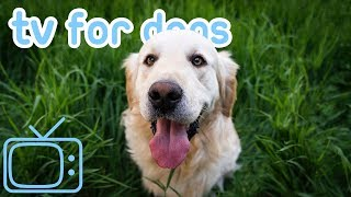 Download The ULTIMATE Dog TV! Compilation of Dog Walks and Abstract TV for Dogs Video
