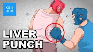 Download Why can't your body handle a punch to the liver? - Human Anatomy |Kenhub Video