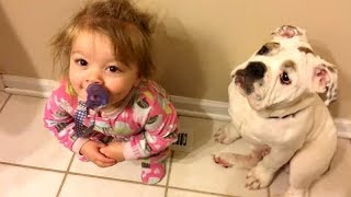Download HUMAN & ANIMAL BABIES are the best COMBINATION! - You CAN NOT AVOID LAUGHING! Video