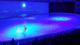 Download Kolmården delfinshow 2015 Video