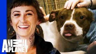 Download Vladimir Finds A New Home Where He Learns 'How To Dog' | Pit Bulls & Parolees Video
