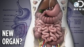 Download You Now Have A New Organ: Meet The Mesentery! Video