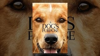 Download A Dog's Purpose Video