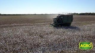 Download NEA: El algodón tiene con qué y busca resurgir (#777 2018-06-23) Video