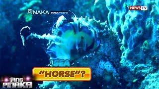 Download Ang Pinaka: Misleading animal names Video