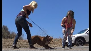 Download Pit Bull stranded in a canyon rescued by a Hope For Paws team. Video