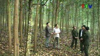 Download Hiệu quả bước đầu từ các mô hình trồng rừng gỗ lớn tại Thanh Hóa Video