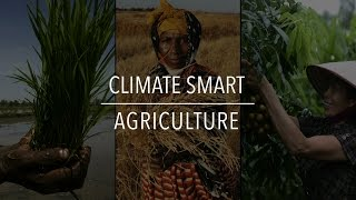 Download FAO Policy Series: Climate Smart Agriculture Video