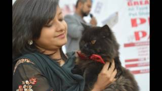 Download Dr. Sagir's Pet Show 2015 Contact for next show 01912251312 Video
