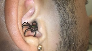 Download SPIDER IN EAR ! Video