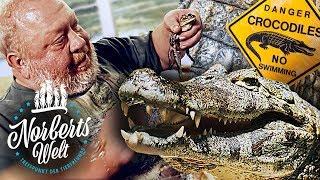 Download VORSICHT KROKODILE! | DER KAIMAN - NORBERTS LIEBLINGSTIER! | NORBERTS WELT | Zoo Zajac Video