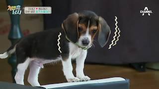 Download 장난감 쥐 등장에 쌤X애리 혼비백산! '사냥개 맞어?ㅋ'(ft.犬생 최고 굴욕ㅋㅋ) Video