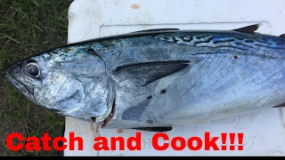 Download Catch and Cook: How to EAT a Bonito !! (can you eat it?) Video