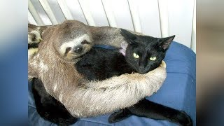 Download Super WEIRD & CUTE ANIMAL FRIENDSHIPS - I BET you will LAUGH FOR HOURS Video