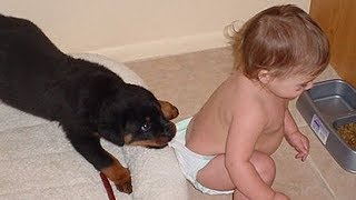 Download Rottweiler Dogs Protecting and Playing With Babies Kids Compilation - Dog protects owners Videos Video