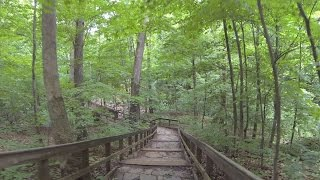 Download Highbanks Virtual Trail Run Video