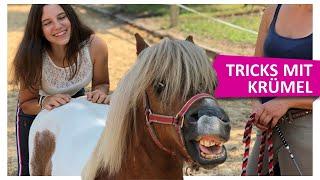 Download Alle Tricks mit IMMENHOF Pony Krümel 💪🏻 Video