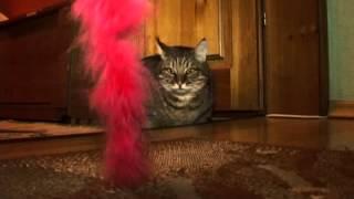 Download Огромный кот, покоривший тысячи сердец Video