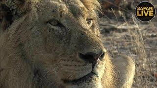Download safariLIVE - Sunrise Safari - October 7, 2018 Part 2 Video