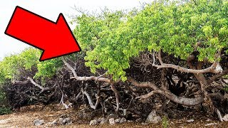 Download If You Ever See This Tree, Run Fast And Yell For Help! Video