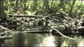 Download Zeitgeist - Third Movie - 2011 Video