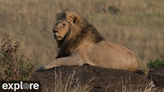 Download African Wildlife Meditation powered by EXPLORE.org Video