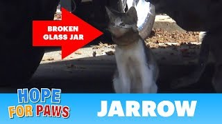 Download A broken jar over this cat's head almost killed him! Video