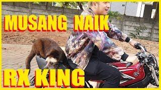 Download KISAH MUSANG GW.ISTRI ANAK MOTOR,SUAMI JADI MODEL Video