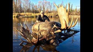 Download Self Guided Alaskan Giant Moose Hunting / 4 Moose Shot / Kent Kaiser Video