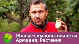 Download Живые символы планеты. Армения. Растения   Живая Планета Video