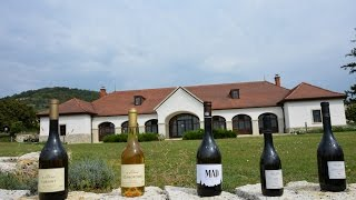 Download Come With Me To Hungary - the Tokaj Wine Region Video
