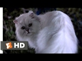 Download Stuart Little (1999) - Not Bad for a House Cat (10/10) | Movieclips Video