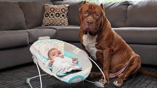 Download Amazing Dogs Meet Newborn Babies First Time | Dog Love Baby Video Compilation Video