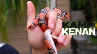 Download Egg Thief! The Florida Scarlet Snake Video