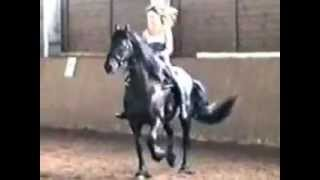 Download Riding Hall.mov Video