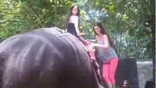 Download Elephant Ride in Kerala, India - Jul 2012 Video