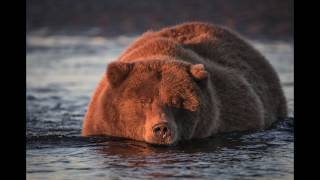 Download Lessons in Wildlife Photography with the Sigma 150-600 S lens Video