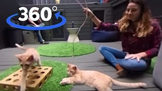 Download VR: Play With Cats at Koneko Cat Cafe in NYC (360° Video) | The Dodo VR Video