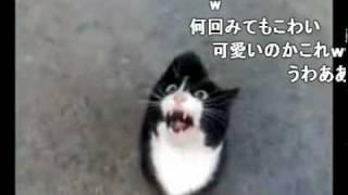 Download 怒ってた猫が急に話しかけて来たけど、ネコ語だからわからない、コメ付 Video