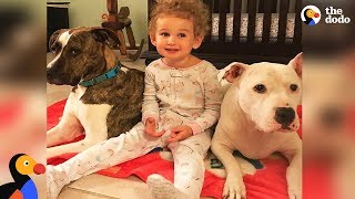 Download Girl Loves Taking Care Of Her Pit Bull Dog Best Friends | The Dodo Video