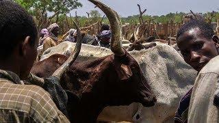 Download Développement de l'élevage à Kaga-Bandoro Video