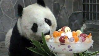 Download 【おめでとう♪】タンタン🐼22歳のバースデーパーティ🎊【神戸パンダ】Giant Panda -TanTan-☆Happy 22th Birthday party♪ Video
