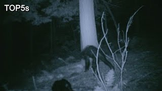 Download 5 Most Compelling Pieces Of Bigfoot Evidence Video