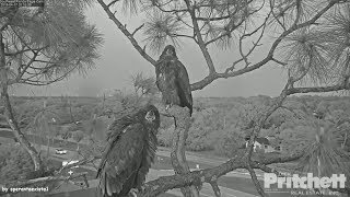 Download SWFL Eagles ~ They Went Out For Dinner. We Will Eat Tomorrow, Bro 4.17.18 Video