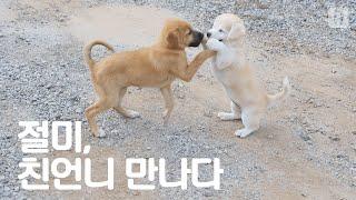 Download 도랑에서 구출된 절미 드디어 가족과 상봉하다 Video