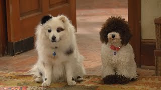 Download Dog With A Blog - Freddy & Gracie Video